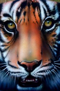 tigerface1_450